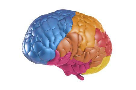 creativity concept with 3d rendering colorful brain