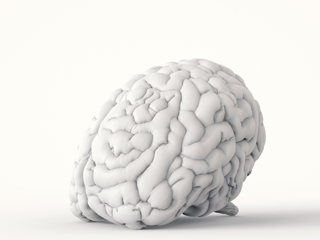 3d rendering white human brain on white background