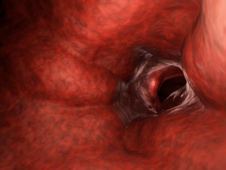 rendering: 3d rendering blood vessel