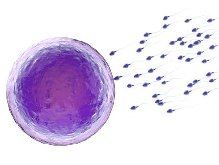 3D-rendering sperma te bevruchten met een eicel Stockfoto