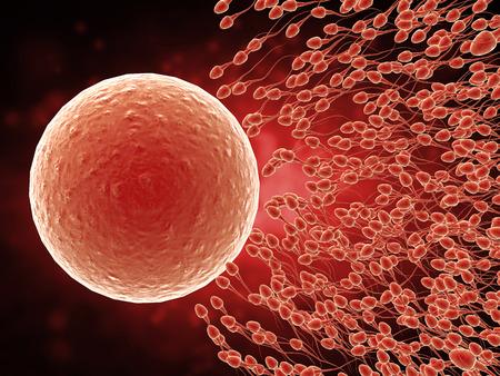 3d prestación de espermatozoides fertilizar el óvulo con Foto de archivo