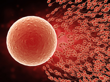3d rendering sperm fertilize with ovum Stock Photo