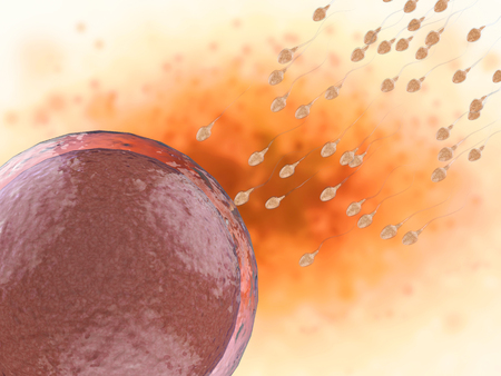 zygocyte: 3d rendering sperm fertilize with ovum Stock Photo