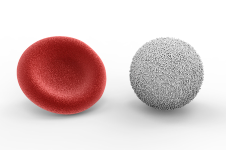 3d rendering white blood cell with red blood cell on white background