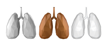 3d rendering low polygonal lung isolated on white