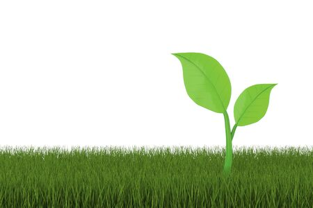 3d rendering green leaf on grass with white