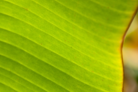 banana leaf green floral natural background texture photo