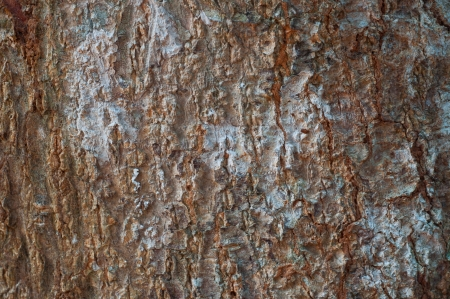 Narural tree bark for texture and background photo