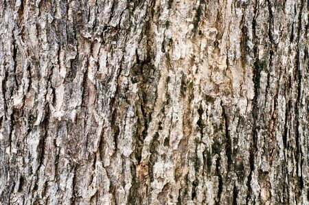 Tree bark pattern for texture and background Stock Photo - 13628048