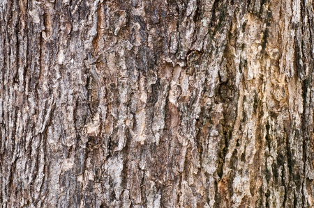 Tree bark pattern for texture and background photo