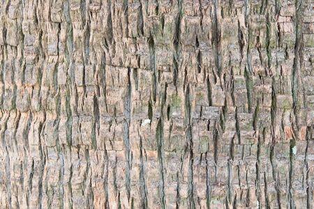 ruggedness: Palm tipo di impiego albero per trama e lo sfondo
