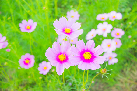 korat: Flower Garden at Jim Thomson, Korat, Thailand Stock Photo