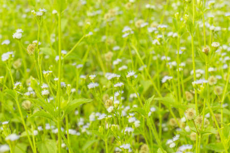 field depth: Tiny spring flowers with shallow depth of field