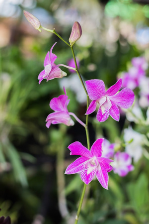 olant: Beautiful orchid garden, outdoor background