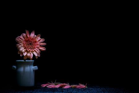 Todavia Florero De La Vida Con Las Flores De Fondo Negro Fondo De