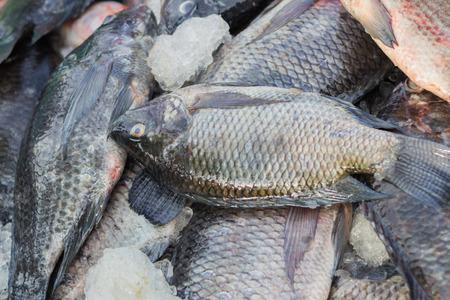 cyprinoid: Fresh fish background
