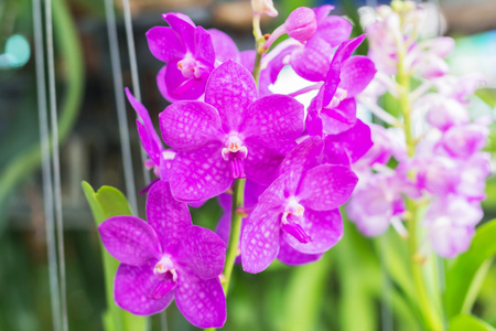 Beautiful orchid garden, outdoor background