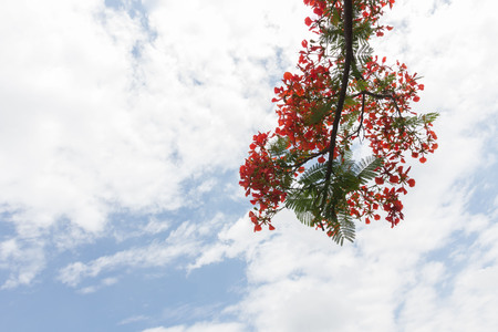 Guppy flower with sky background