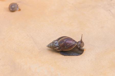 달팽이가 서서히 등반하고 있습니다.