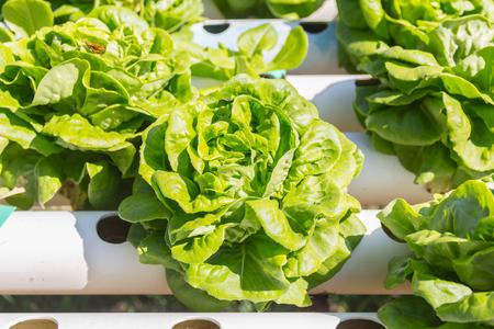 Hydroponics vegetable growing in the nursery