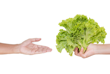 Hand accept a lettuce on white background Stock Photo