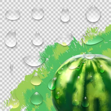 Water drops realistic. Falling drop round shape set on watermelon.