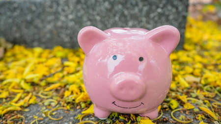 piggy bank in beautiful yellow flower background. piggy bank in spring sunny day. saving money for investment in future concept.