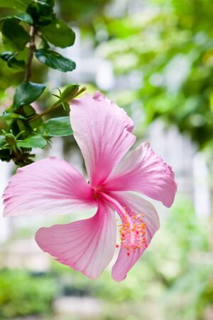 Pink flower Stock Photo - 14869234
