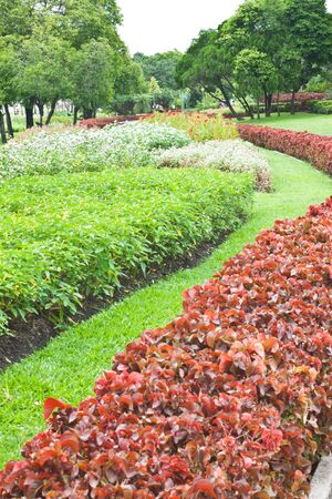 Flower in garden Stock Photo - 15091080