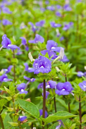 Purple flower Stock Photo - 15089614
