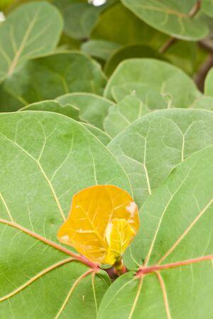 leaf of tree photo