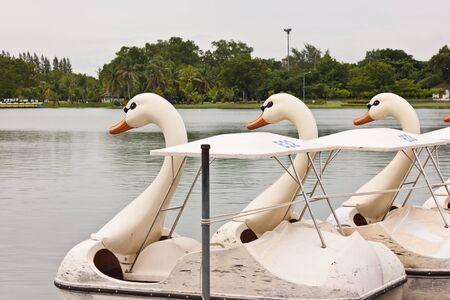 water cycle: swan water cycle