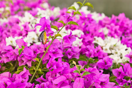 butterfly and pink flower photo