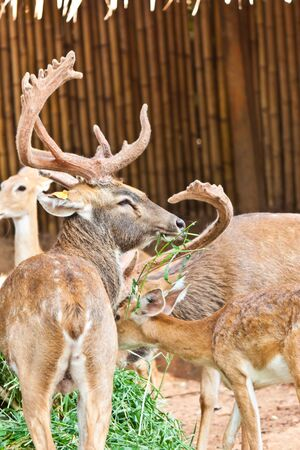 small deer Stock Photo - 17391737