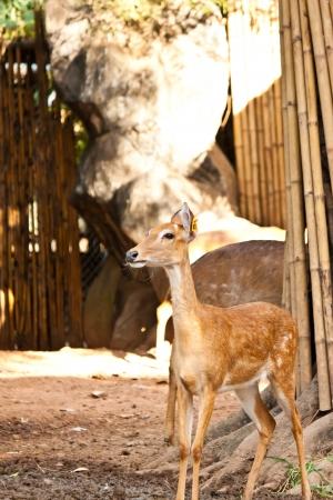small deer  Stock Photo - 17391723