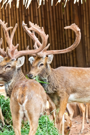 many deers in zoo Stock Photo - 17391738