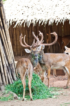 many deers in zoo Stock Photo - 17391740