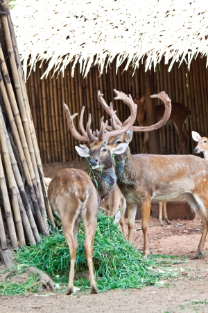 many deers in zoo Stock Photo - 17391739