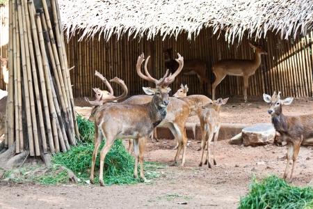 many deers in zoo photo