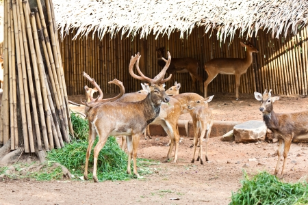 many deers in zoo Stock Photo - 17391757