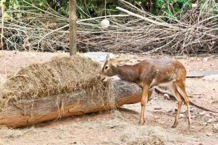 small deer  Stock Photo - 17391764