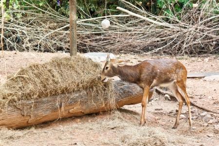 small deer Stock Photo - 17391764