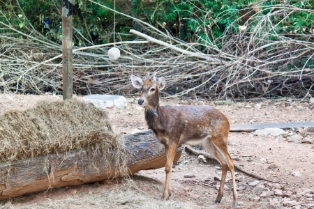 small deer Stock Photo - 17391762