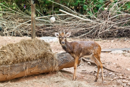 small deer Stock Photo - 17391760