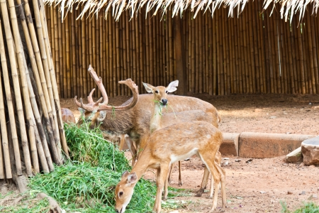 many deer in zoo photo