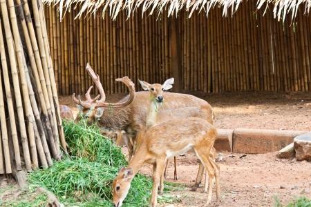many deer in zoo Stock Photo - 17391754