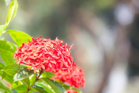 red flower spike photo