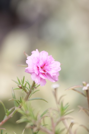 small flower photo