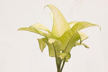 leaf of plant photo