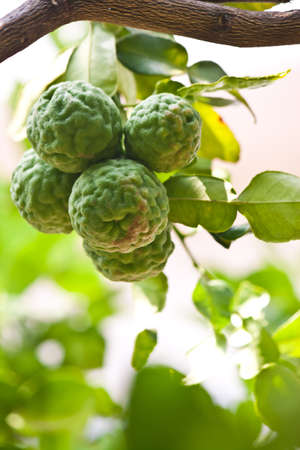Plants with lime Stock Photo - 18493327